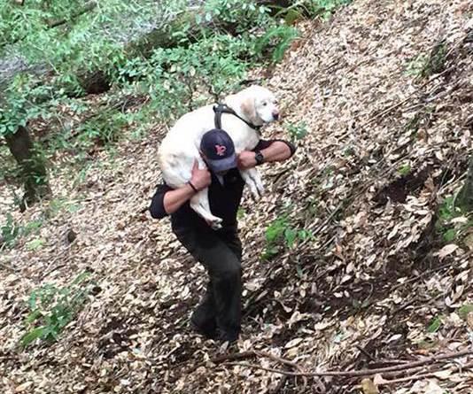 Dan Estrada levantó a Sage en sus hombros y la llevó hasta su casa