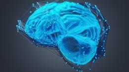 """""""Las neuronas de las redes neuronales artificiales son eso, artificiales, y su relación con las neuronas del cerebro tiene más de analogía metafórica que de un funcionamiento realmente similar"""", señaló José Dorronsoro"""