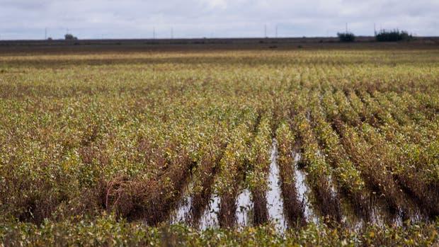 Se calculan que se perderán hasta US$ 2000 millones por el exceso de lluvias