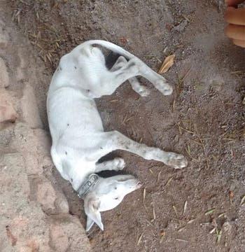 Así aparecieron los perros muertos en el refugio de Córdoba. Foto: DoceTV