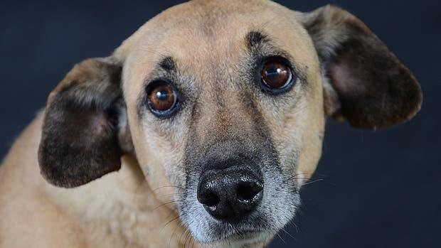 Perros de la calle: su ternura y sabiduría en fotos