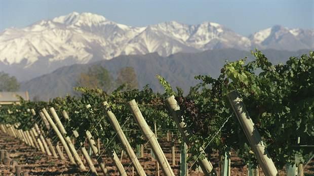 Según el informe, la reforma le pega fuerte a la cadena vitivinícola