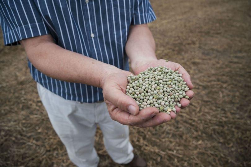 Producción de legumbres en Entre Rios