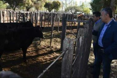 El gobernador Cornejo, al visitar una feria, destacó los avances para la ganadería