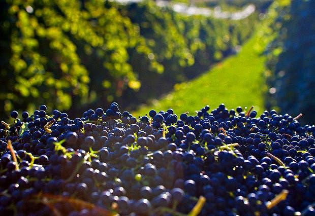 Recorrimos los garages de Chacras de Coria para descubrir algunas perlas de la producción vitivinícola artesanal