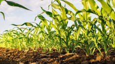 Buenas condiciones para el cultivo