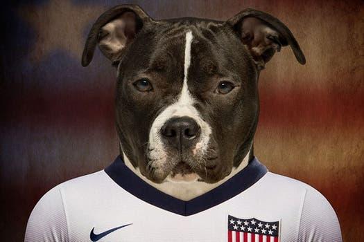 Staffordshire Terrier, de Estados Unidos.
