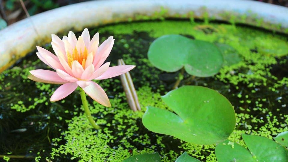 C mo hacer un estanque verde con una maceta for Como hacer un estanque con una llanta