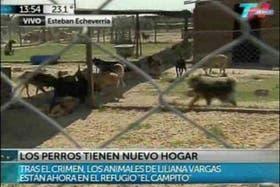 """Los 15 perros fueron trasladados al refugio """"El Campito"""""""