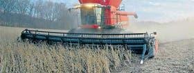 El servicio de cosecha viene con mayores costos en el ciclo 2009/2010