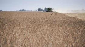 Mejora la competitividad del cultivo