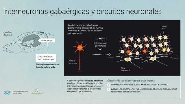 Infografia - interneuronas