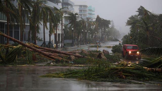 Árboles caídos cortan las calles en Miami Beach
