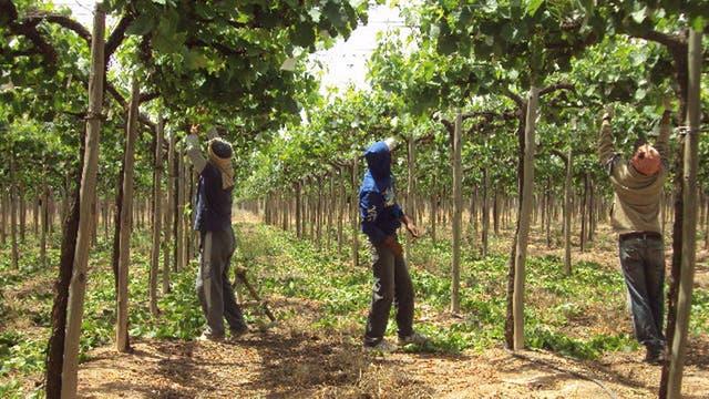 Trabajo intenso en la bodega Valle de la Puerta, en La Rioja
