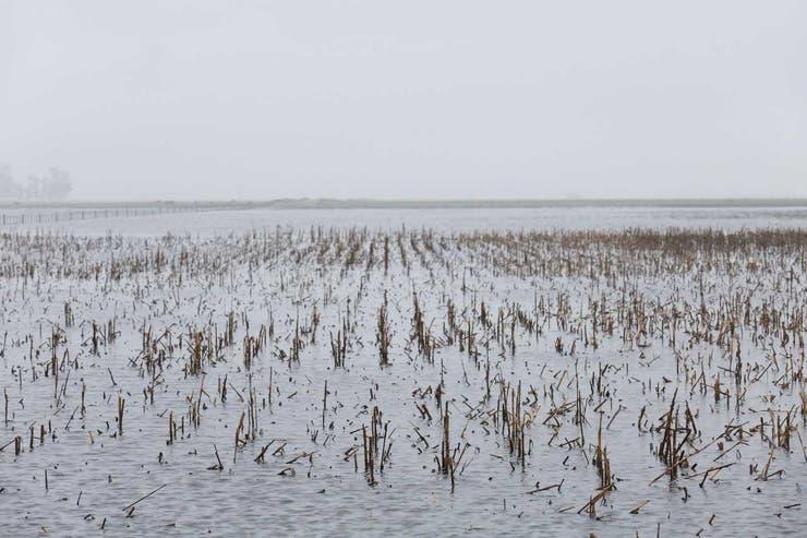 Las inundaciones dejaron consecuencias que hoy se hacen visibles sobre todo en los campos desparejos