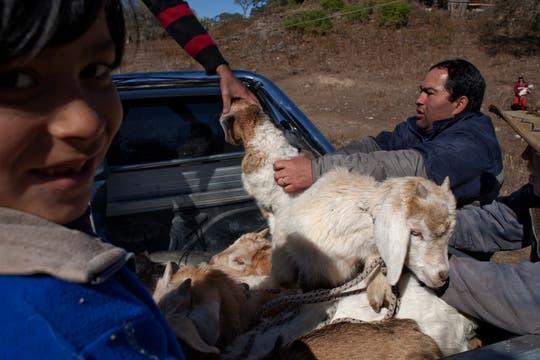 Los vecinos de Doña Paula, atentos y solidarios, se llevan unas cabras para Ancasti, a pocos kilómetros de donde vive Paula. Foto: LA NACION / Rodrigo Néspolo/Enviado especial