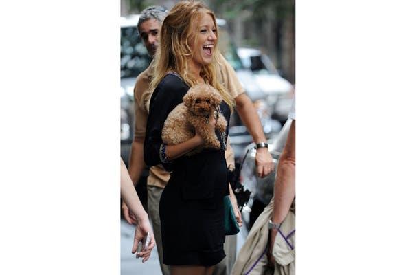 Mirando a cámara, el perro de Blake Lively ya se convirtió en una superstar de Hollywood. Foto: Vía missatlaplaya.com