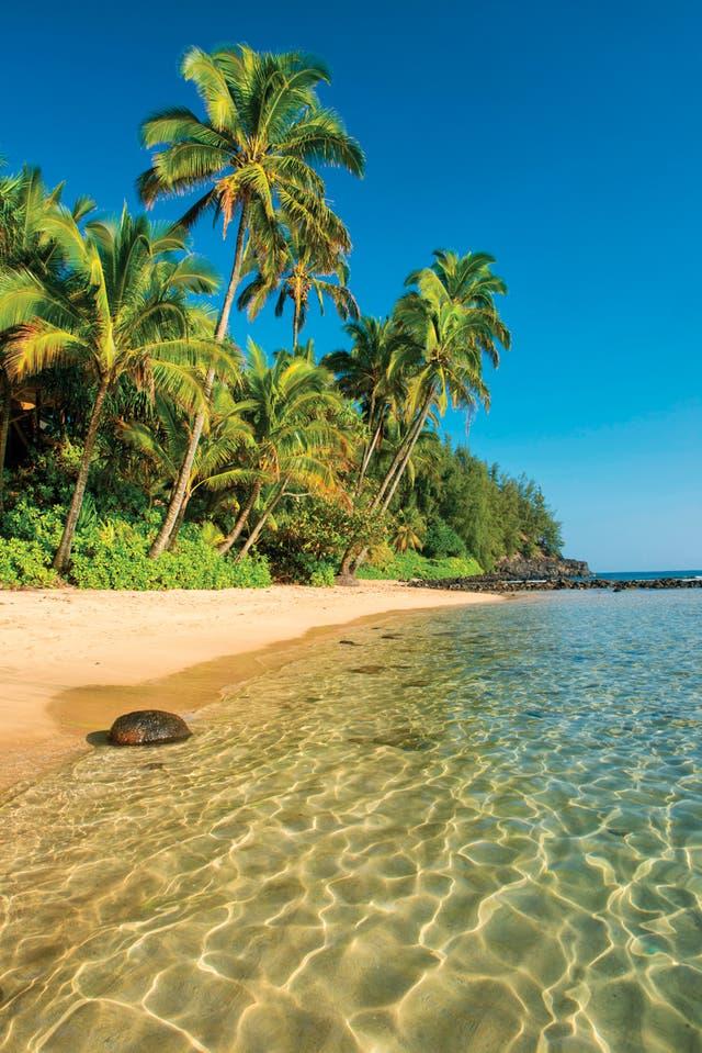 Hay playas de arena blanca, roja o negra; solitarias o más concurridas, todas son fabulosas.