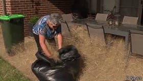 Esta hierba mala no representa un riesgo para la salud de los gatos y perros