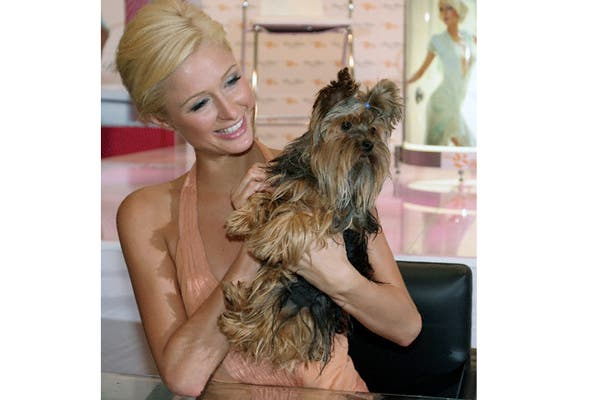 Si de lujos perrunos se trata no podemos dejar afuera a Paris Hilton y su yorkie. Para que sus mascotas disfruten de una vida de lujos, la blonda heredera creó una replica de su mansión de Beverly Hills, pero en miniatura. Foto: Corbis