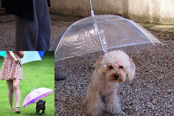 Para poder sacar a pasear al perro hasta en los días más feos. Foto: boredpanda.com