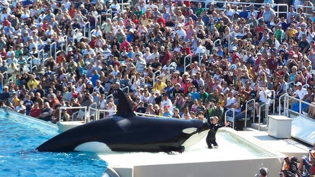 Sea World anunció que las ballenas que actualmente están en su acuario son la última generación de orcas allí