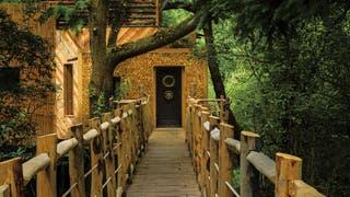 Dormir en esta casa del árbol sale 500 dólares la noche, y vale la pena