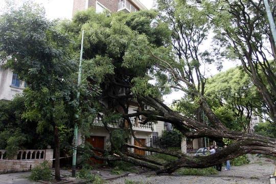 Gran cantidad de árboles caídos en las calles, sobre autos y sobre casas. Foto: DyN