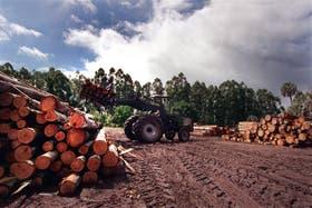El futuro de la industria forestal pasará por bosques gestionados y con certificación ambiental
