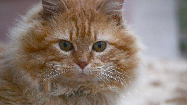Garfield estaba en la calle y fue atacado por perros