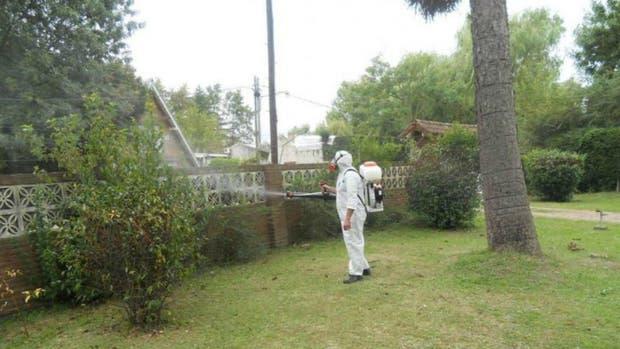 En muchos lugares con presencia del mosquito transmisor se fumiga