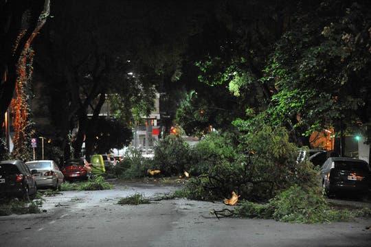 Gran cantidad de árboles caídos en las calles, sobre autos y sobre casas. Foto: Télam