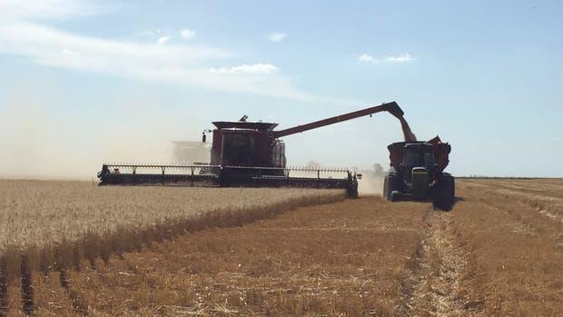 Para el Gobierno, la cosecha fue récord