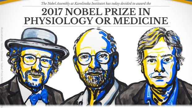 Premio Nobel de Medicina 2017: tres estadounidenses galardonados por sus descubrimientos sobre relojes biológicos
