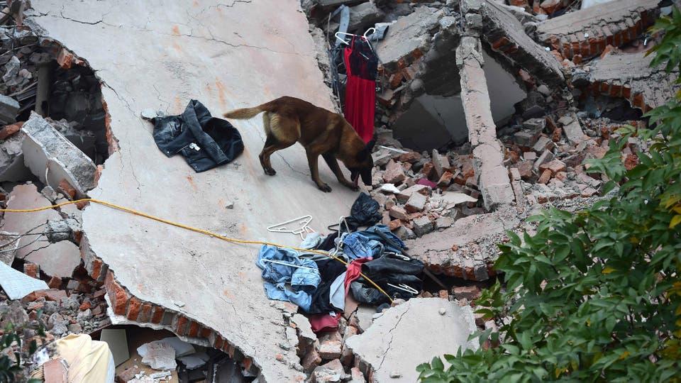La ciudad de México se declaró en estado de emergencia. Foto: AFP