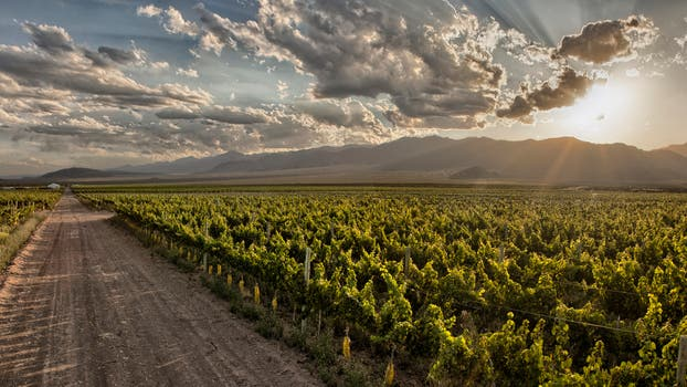 Finca El Milagro – Valle de Uco - Mendoza.