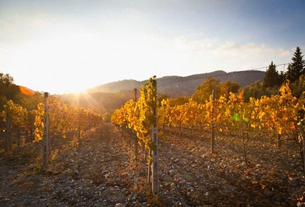 En qué consiste esta tendencia a buscar vinos con menos intervención