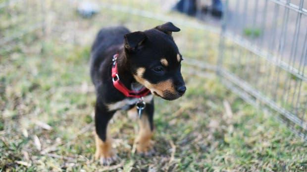 Uno de los cachorros que necesita un cuidador
