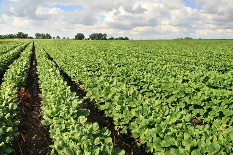 Sumó US$3,6 y acumuló un alza del 2,9% desde el viernes; importante mejora en la harina