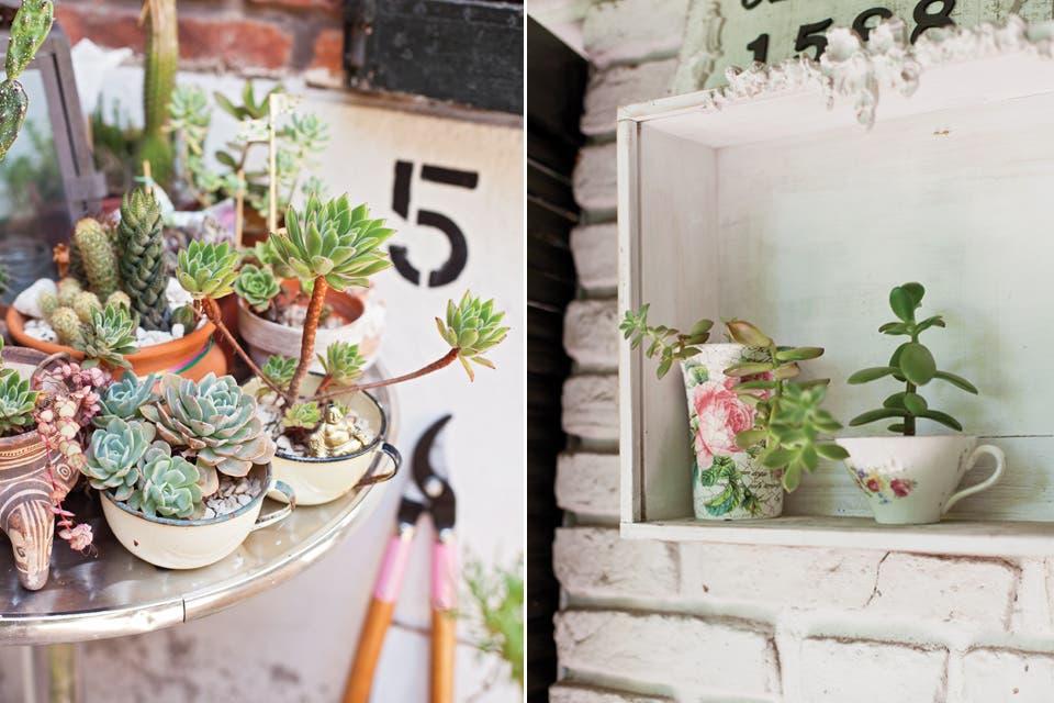 Algunos cactus en macetas, una colección personal de suculentas, una caña y apenas algunas gramíneas completan el planteo vegetal elegido para el patio de esta casa de Adrogué.  /Javier Picerno