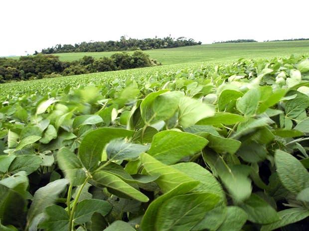 Preocupa la condición climática para los cultivos en general en varias regiones de los Estados Unidos