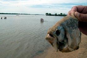 Una imagen de la palometa, al borde del río Paraná