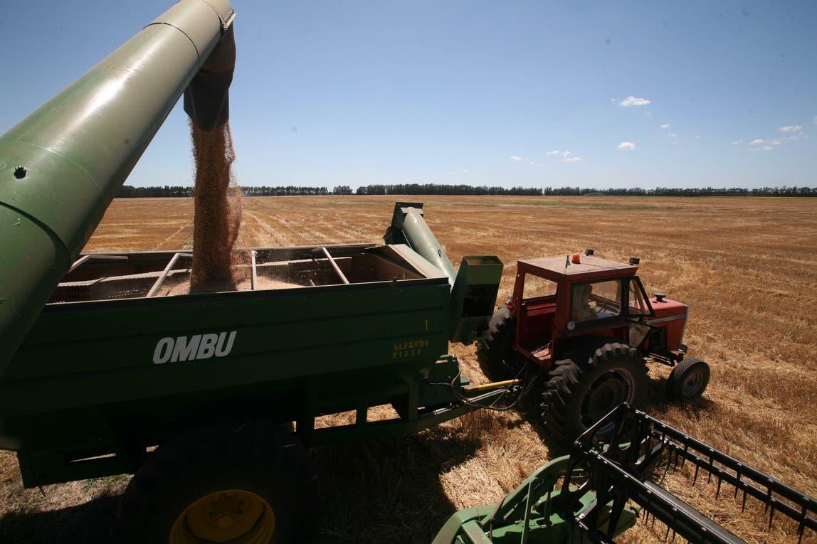 Buscan agilizar las operaciones en el mercado de granos.