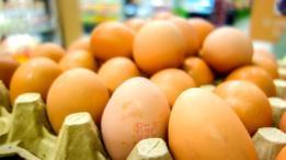Hasta la fecha, 17 países encontraron niveles elevados de fipronil en huevos importados de Holanda.
