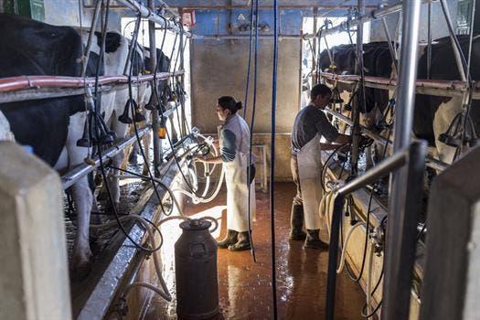 El sector busca recomponer producción