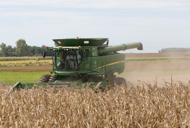 Si bien cayó el valor bruto global de la cosecha, en maíz hubo un aumento del 11 por ciento