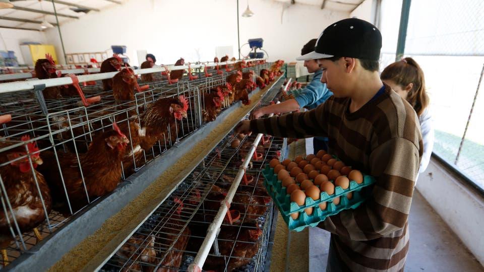 También donan huevos al hospital y a comedores escolares. Foto: LA NACION / Mauro V. Rizzi