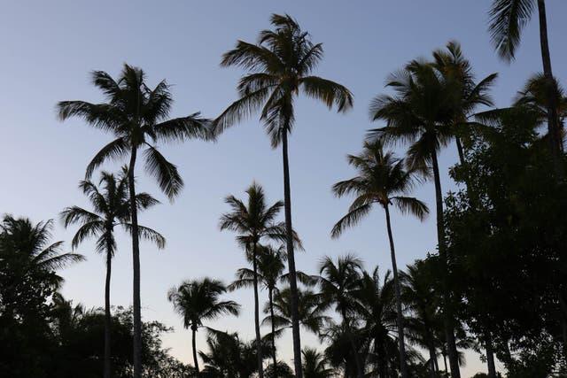 Atardecer en el cielo cubierto de palmeras de Trancoso. Soledad Gil