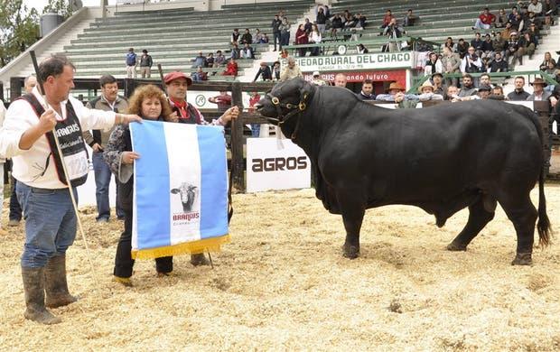 Gran Campeón Macho, de La Bellaca