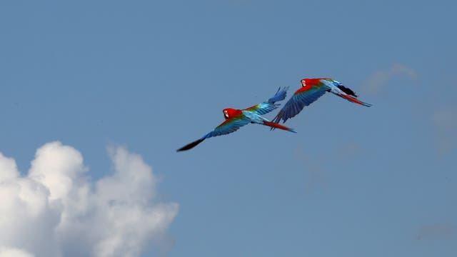 Rojo, azul y verde: un espectáculo impar en el cielo correntino. Foto: LA NACION / Santiago Hafford